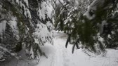 geada : Tracking shot through snowy pine trees (1)