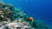 そのまま : Underwater landscape of coral reef. Amazing underwater marine life world. Scuba diving and snorkeling