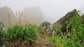 bizarro : Green landscape with mist flowing over huge mountain slopes. Lush vegatation of Santo Antao high plain. 4K footage Cape Verde Cabo Verde