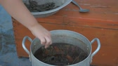 lobster : Live crayfish caught in the river are cooked in arge aluminum pan in open air. Woman puts dill in saucepan and salt water. Crayfish are boiled in water. Village Children help to cook crawfish.