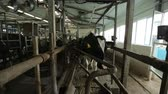 kuh melken : cows go after milking in the paddock