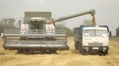 harvester in the field removes wheat