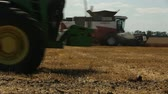kombajn : harvester in the field gathers ears of wheat