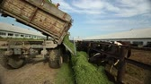 a truckload of alfalfa is coming along an open paddock Dostupné videozáznamy