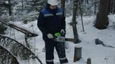 para baixo : Worker sawing with chainsaw in winter forest