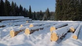 nature resources : Pile of logs on snow in forest Stock Footage