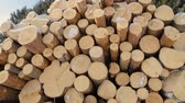 lumbering : Pile of logs on snow in forest Stock Footage