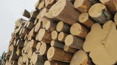 lumber industry : Big pile of logs in winter forest Stock Footage
