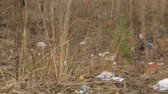 odpady : Litter in spring forest area