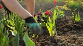 canteiro de flores : Planting flowers in the garden