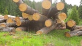 log : Whole timber logs on green grass