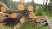 dřevěný : Whole timber logs on green grass