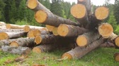 boulon : Whole timber logs on green grass