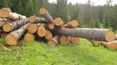mnoho : Whole timber logs on green grass