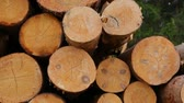 долго : Whole timber logs on green grass