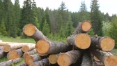 kereste : Whole timber logs on green grass