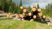 mentira : Whole timber logs on green grass
