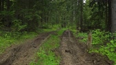 dżungla : Deep-rutted forest road in summer Wideo