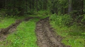 протектор : Deep-rutted forest road in summer Стоковые видеозаписи