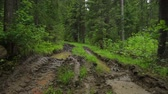 сельский : Deep-rutted forest road in summer Стоковые видеозаписи