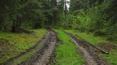 vidéki táj : Deep-rutted forest road in summer Stock mozgókép