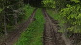 kir : Deep-rutted forest road in summer Stok Video