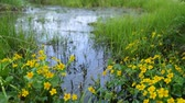 wetland : Swamp area in summer Stock Footage