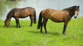уздечка : Horses grazing on meadow near river