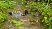 proud : Forest brook in summer