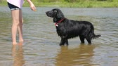 collar : Girl playing with her dog in the river Stock Footage