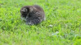 chmýří : Little kitten on the grass Dostupné videozáznamy
