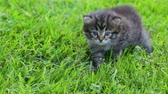 полосы : Little kitten on the grass Стоковые видеозаписи