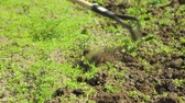 canteiro de flores : Weeding soil in the garden