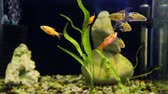 okulary : Shoal of fish in aquarium Wideo