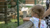 watches : Little girl with mother in zoo