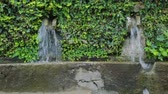 para baixo : Wall fountain in botanical garden Stock Footage