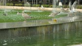 sıçramalarına : Seagulls in fountain on street
