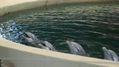 zoo : Dolphin show in dolphinarium Stock Footage
