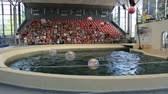 sıçramalarına : VARNA, BULGARIA - JULY, 2018: Dolphin show in dolphinarium Stok Video