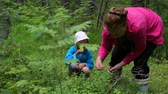 mirtilos : Woman with little girl gathering berries in forest Stock Footage