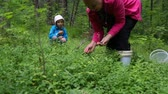 Woman with little girl gathering berries in forest Wideo