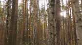 linse : Herbstsaison im Wald Stock Footage