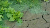 relief : Earth is covered with cracks