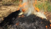 ash : Burning of straw with smoke Stock Footage