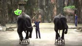 SRIRACHA, THAILAND - MARCH 1, 2018 : Daily elephant show – elephant standing on chair at Sriracha Tiger Zoo, Thailand