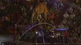 CHONBURI, THAILAND, MARCH 1, 2018: bengal tiger walking on steel bar in a cage at a circus performance tricks, Cage of the Tigers at Sriracha Tiger Zoo, Thailand Vídeos