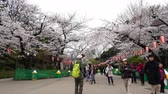 марш : TOKYO, JAPAN - MARCH 29, 2019: Cherry blossom festival at Ueno Park. Ueno Park is one of the best place to enjoy it