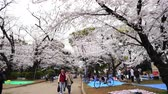marcha : TOKYO, JAPAN - MARCH 29, 2019: Cherry blossom festival at Ueno Park. Ueno Park is one of the best place to enjoy it
