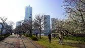 mesire : YOKOHAMA, JAPAN - March 26, 2019: Unidentified people visit cherry blossom at Kishamichi Promenade in Minato Mirai, Yokohama, Japan Stok Video