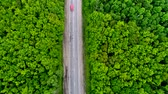 Cars moving slowly on the road through green old forest, bright sunny day, aerial Стоковые видеозаписи